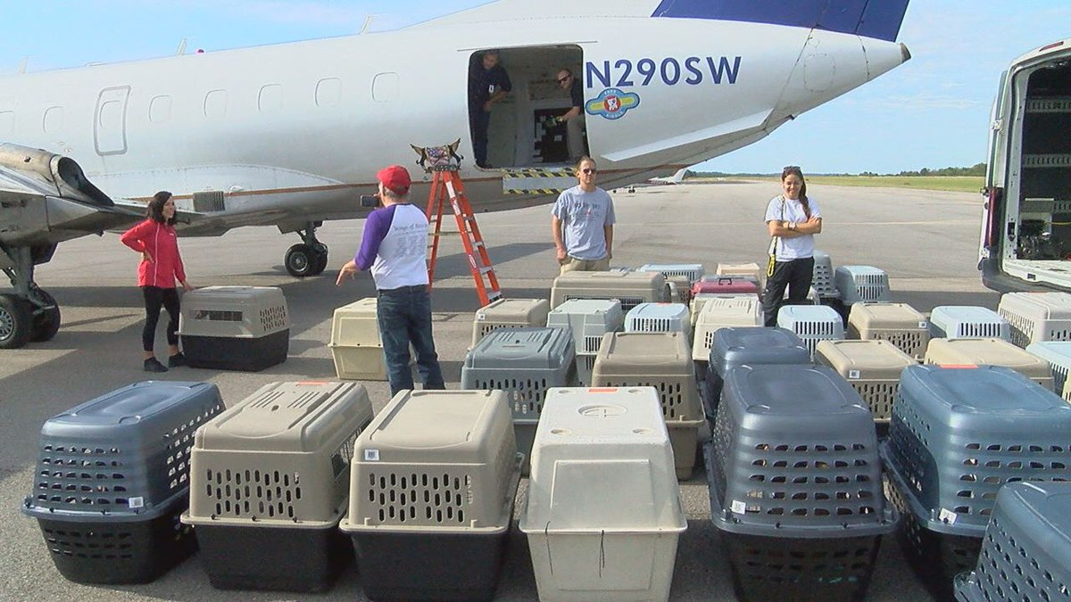Shelter dogs flown to New Jersey to clear up space for hurricane Michael rescues