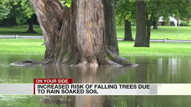 Increased risk of falling trees due to rain soaked soil