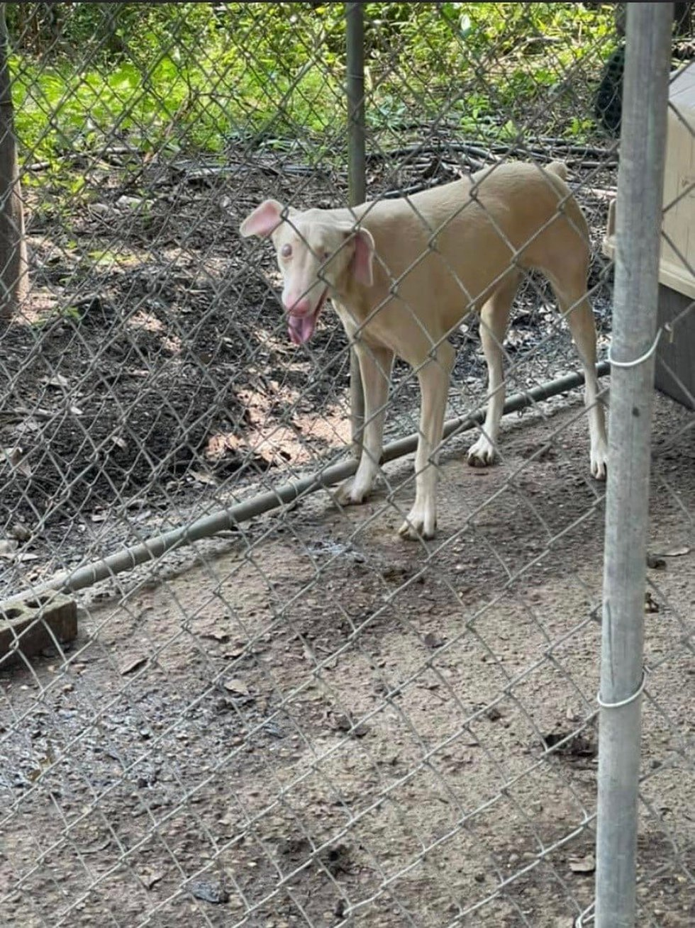 GBHS helps dogs found in puppy mill bust in Louisiana