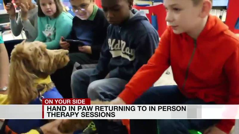 Hand in Paw returning to in-person therapy sessions