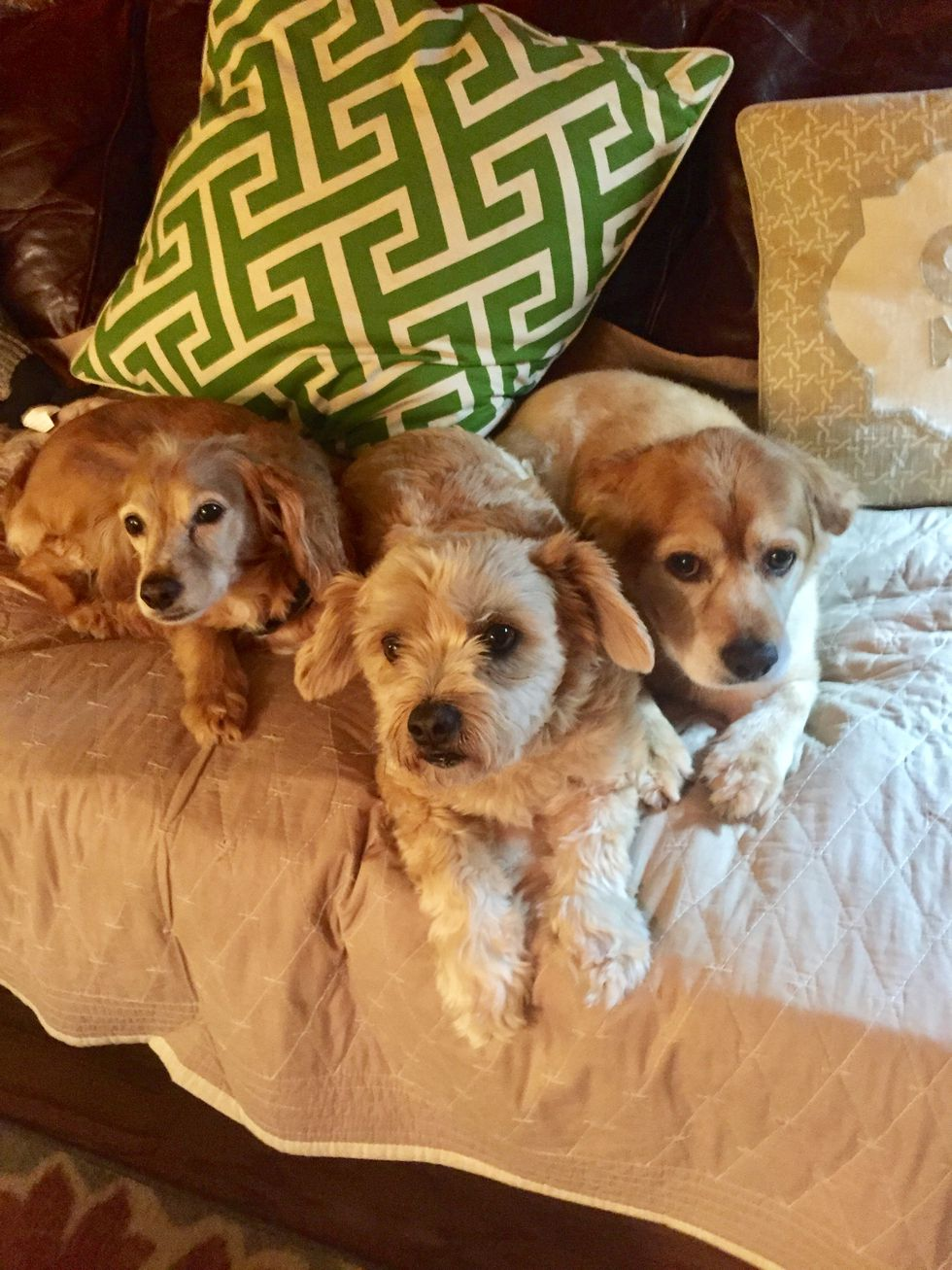 (From left to right) Ruger, Cooper, Sunny. Three of the dogs Jordan Elizabeth Rodgers was...