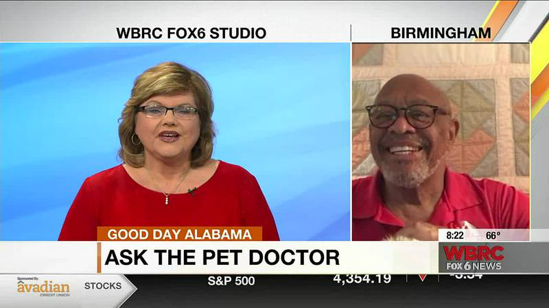 Ask the pet doctor