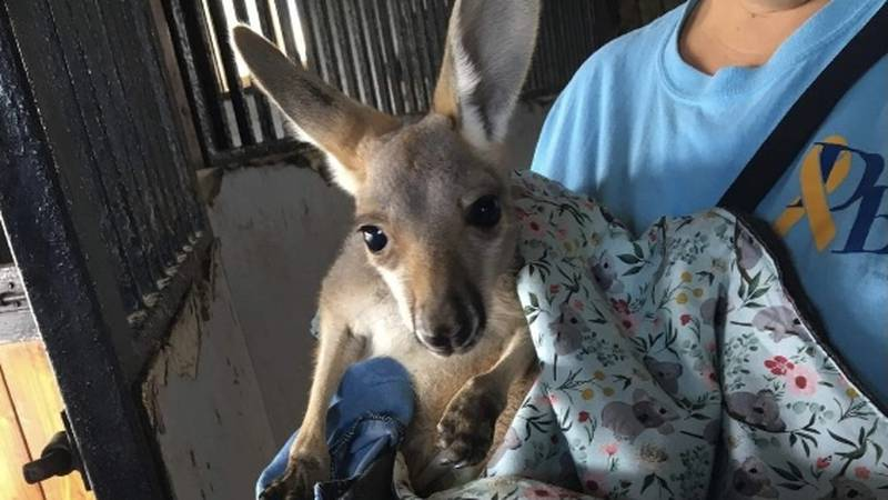 A southern Kentucky farm owner is pleading for the safe return of a very special animal.