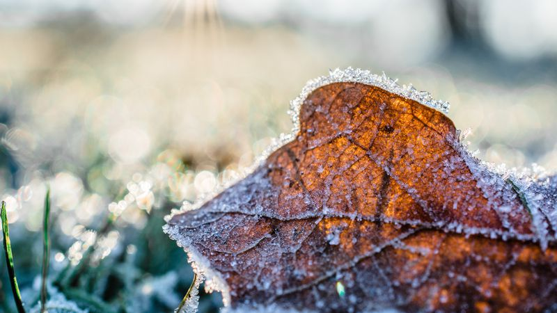 On average, Louisville's first fall frost occurs on October 25 while the first fall freeze...