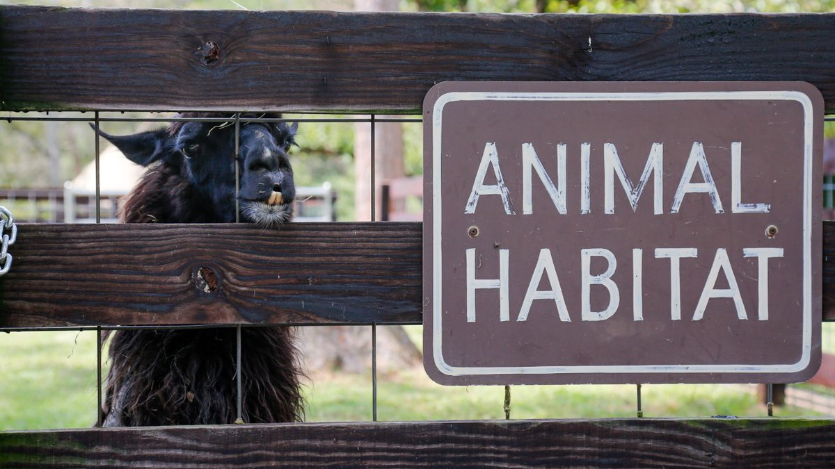 The Noccalula Falls Animal Habitat is reopening Friday after a fire in May.