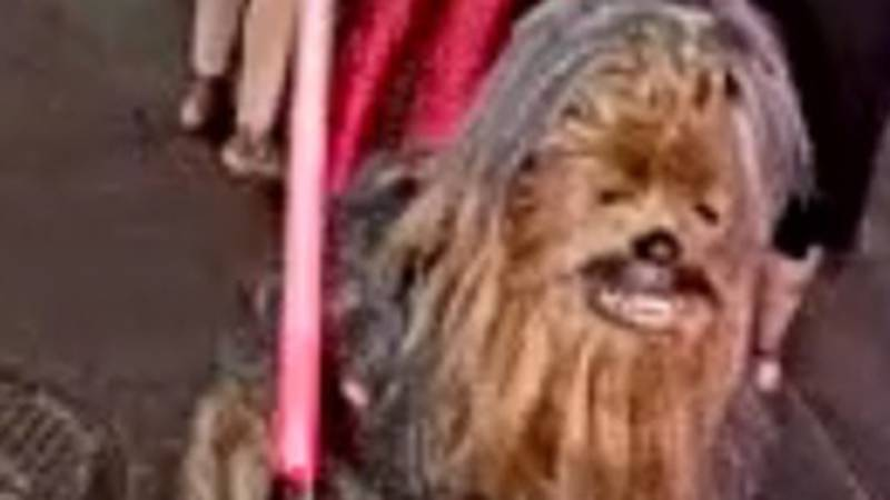 Police are asking for the public's help locating a street performer known to wear a Chewbacca...