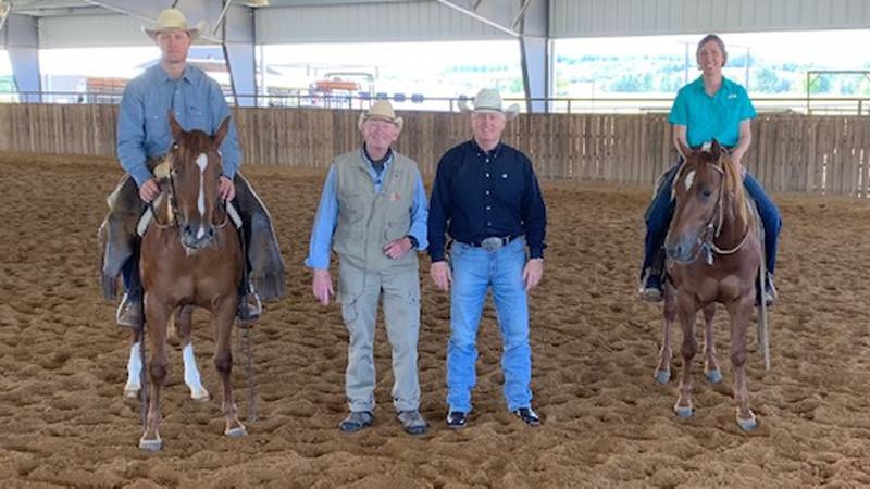 Modern cowboys and cutting horses