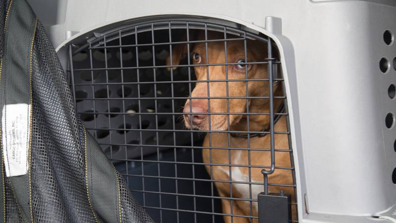 A dog from the Lee County Humane Society is loaded on to a cargo plane at the Auburn University...