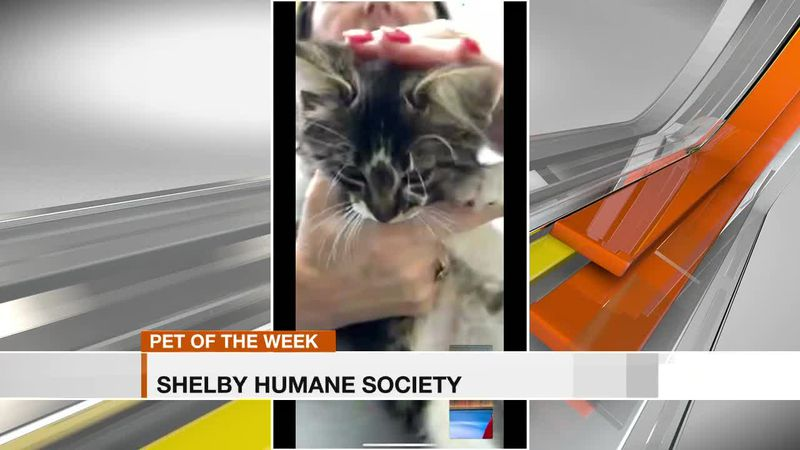 Shelby Humane Society: Pet of the Week