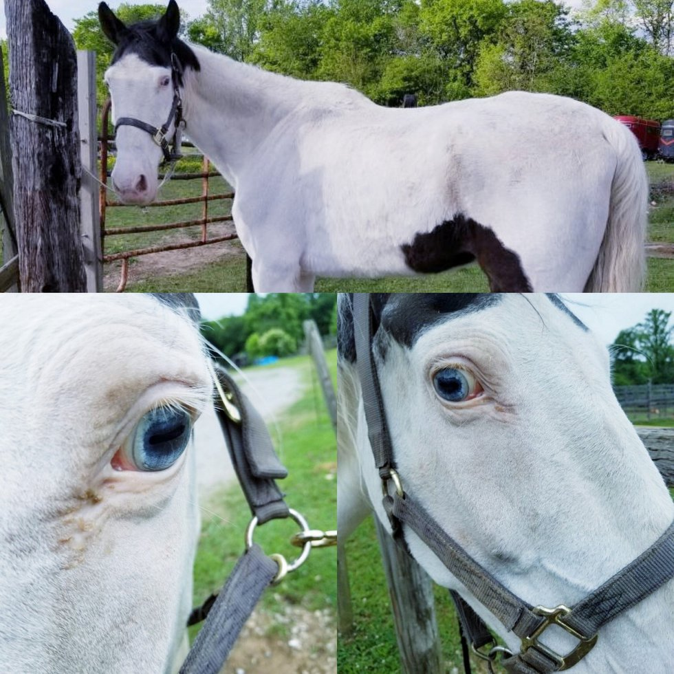 Pierre the horse