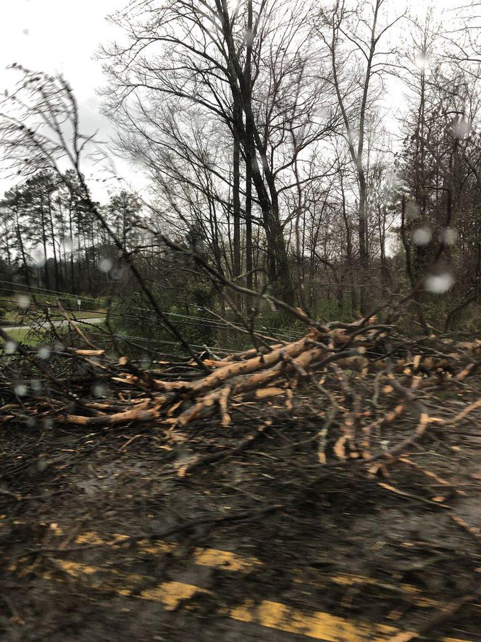 Tree down across Fieldstown Road in Gardendale