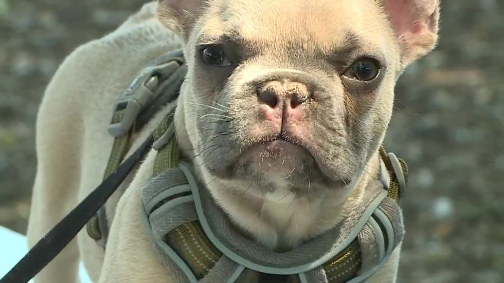 Animal rescue creates bucket list for sick puppy