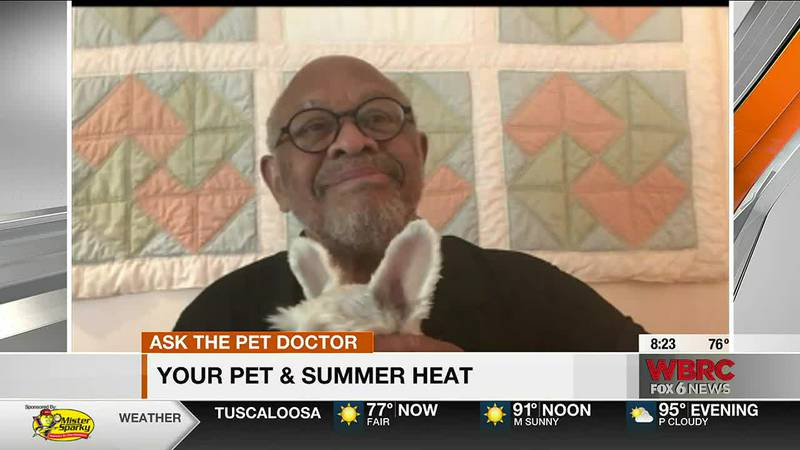 Ask the Pet Doctor: Pets and heat